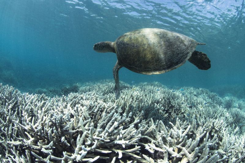 RIP the great barrier reef