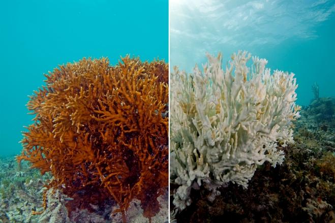 Coral-bleaching-7.jpg
